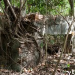 An abandonded structure slowly being claimed by the djungle.